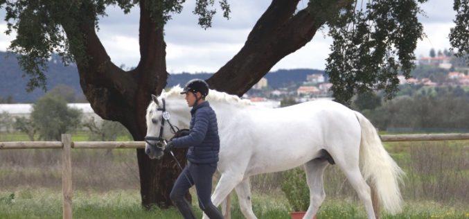 CDI3* Abrantes: 34 Cavalos passaram na inspecção veterinária