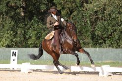Mafra:  II jornada  do Campeonato Nacional Equitação Trabalho 2018