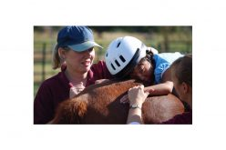 Alunos de Arouca com necessidades especiais em terapia com cavalos