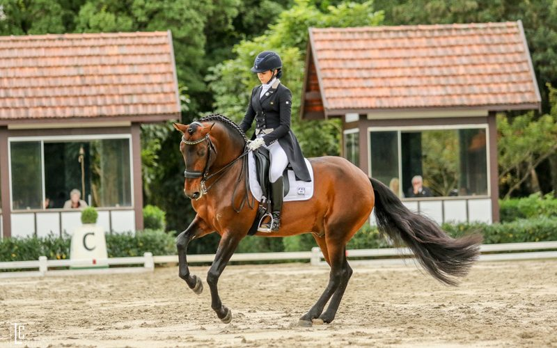 Brasil rumo aos Jogos Equestres Mundiais