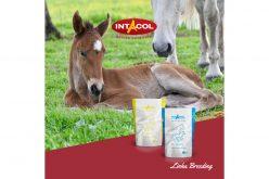 Linha Breeding Intacol: EPOLDRIN para Fases de Reprodução e Crescimento de Equinos