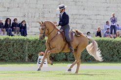 Ainda não é desta vez que a Equitação de Trabalho é reconhecida como disciplina da FEI