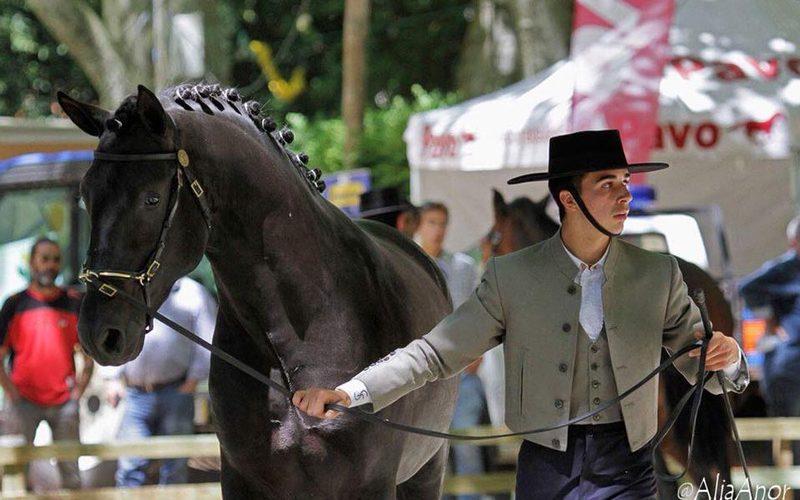 Cavalo lusitano é rei da festa nas Caldas da Rainha