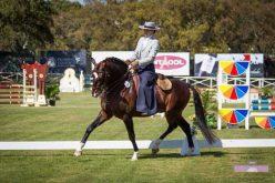 Jogos Equestres Nacionais: Mafalda Galiza Mendes vence nos Cavalos Debutantes