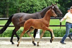 Once again, PS is launching an online foal auction (VIDEO)