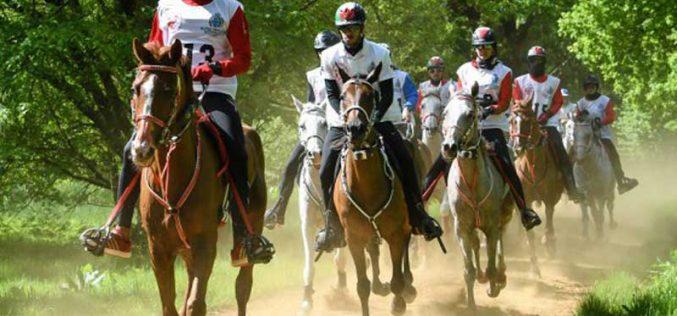Rui Pereira vence o CEI1* do Royal Windsor Horse Show – Inglaterra