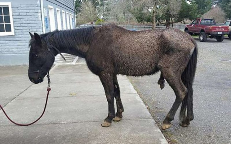 Cavalo processa antiga dona em 113 mil euros por maus tratos…