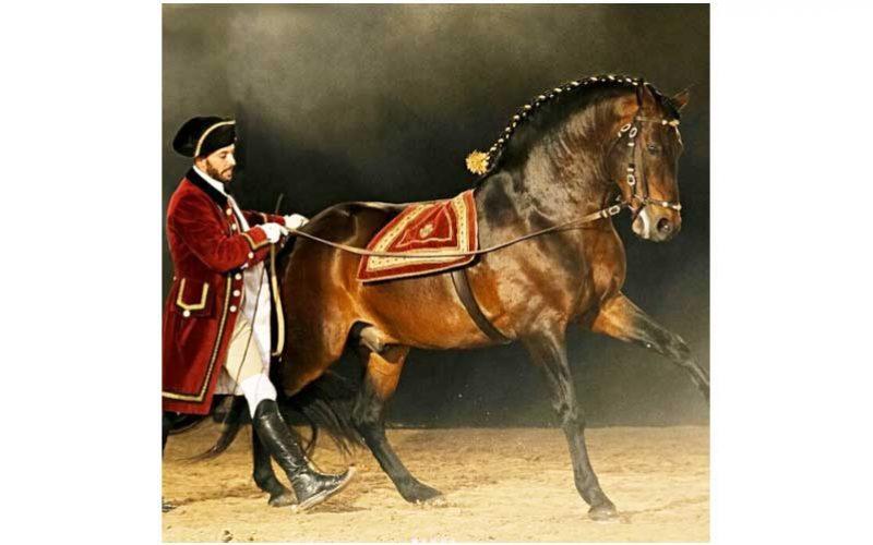 Feira do Cavalo de Ponte de Lima integra Gala Equestre da Escola Portuguesa de Arte Equestre