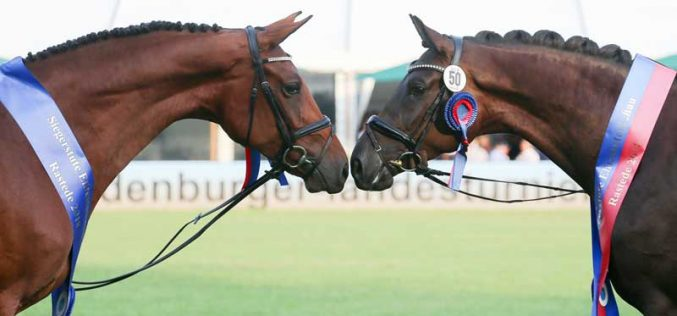 Champion mares fulfill dreams
