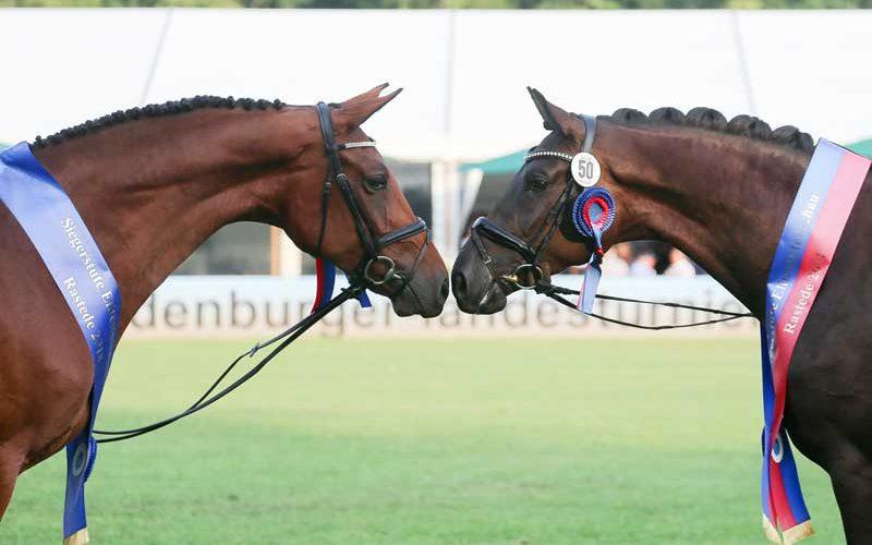 Champion mares fulfill dreams