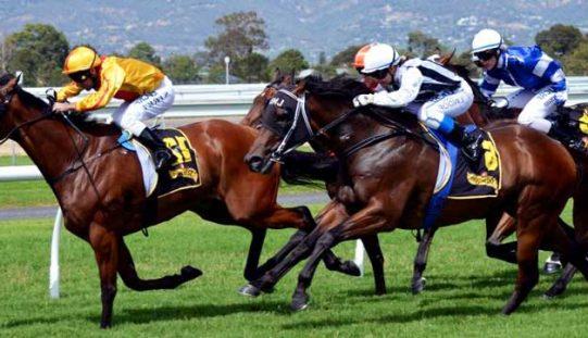 Há cinco empresas que querem explorar apostas nas corridas de cavalos