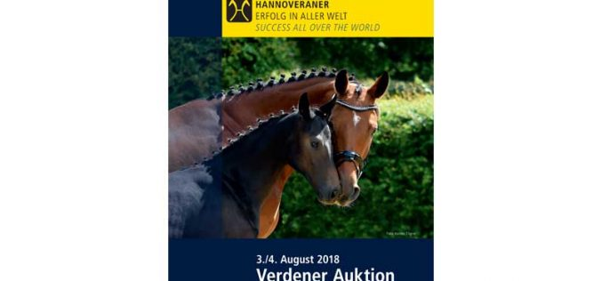 The stars of tomorrow – Verden auction of foals and broodmares on August 3/4