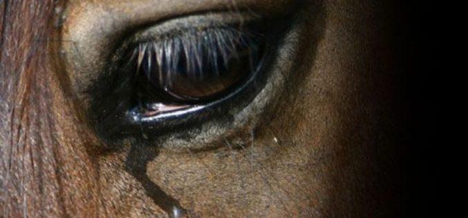 Petição quer alterar legislação para proteger cavalos no país