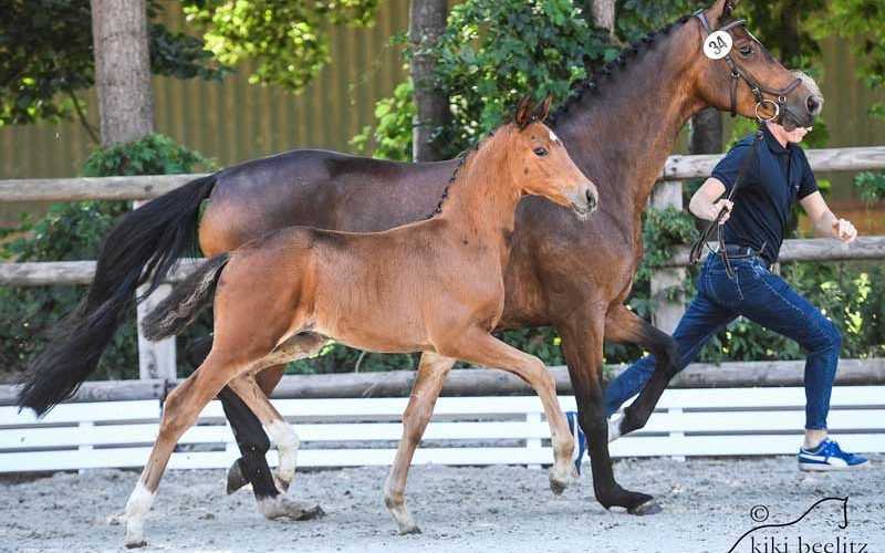 PS Online Foal Auction – Betty Paula and For Amour the price highlights (VIDEO)