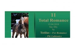 2018 PS Online Foal Auction: Spotlight on Total Romance (VIDEO)