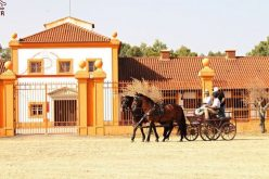 Vila Galé garante concessão da Coudelaria de Alter por 50 anos