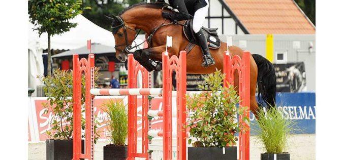 39º Leilão PSI de cavalos Saltos de Obstáculos em Ankum