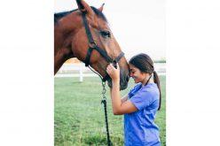 O Auxiliar de Veterinária de Equinos é muito mais que um simples auxiliar de veterinária