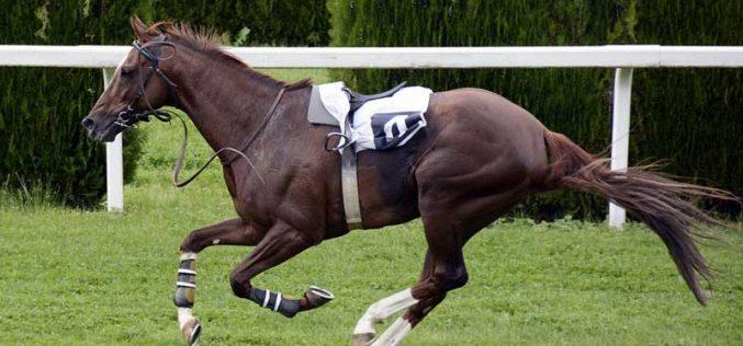 Cavalo invade bar e deixa clientes em pânico (VÍDEO)