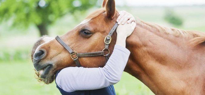 """Projecto """"O Cavalo e Eu… Juntos à descoberta da Literacia!"""