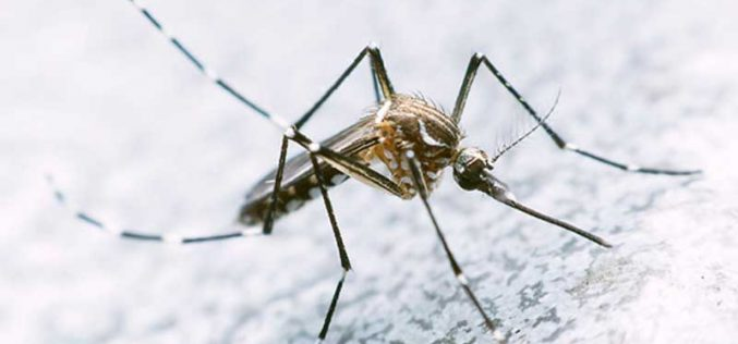 Vírus do Nilo detectado no Alentejo