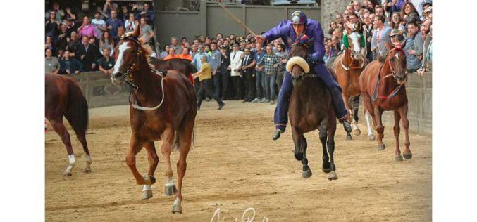 Palio di Siena: Ganha o cavalo sem cavaleiro… (VÍDEO)