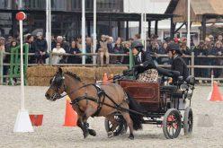 Golegã: Concurso de Atrelagem com domingo em cheio na Feira Nacional do Cavalo