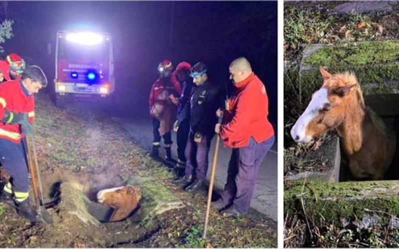 Arcos de Valdevez: Bombeiros salvam cavalo em aqueduto