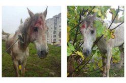 PSP recolhe cavalo que apresentava sinais de maus tratos e abandono