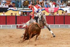 Associação do Cavalo de Raça Luso-Árabe premeia cavalo de Moura Jr