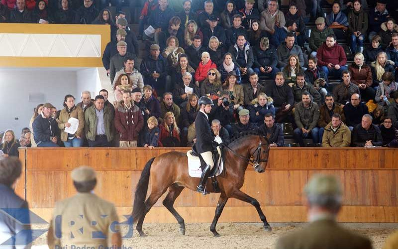 Golegã: Mau tempo não impediu dia dedicado ao Cavalo Lusitano