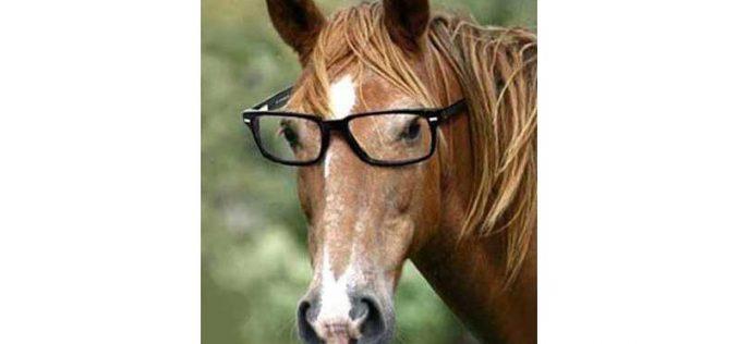 Cavalos são capazes de comunicar com os seres humanos tão bem quanto os caninos