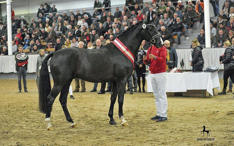 15 new licensed stallions for Hannover
