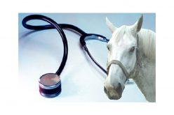 """OMV pede """"isenção de IVA"""" dos serviços médico-veterinários"""