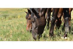 Portugal é o principal mercado de cavalos da Extremadura