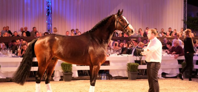 «Dacantos» comprado por €950,000 para Ben Maher