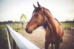Curiosidades: como escolher o nome do cavalo e algumas ideias interessantes