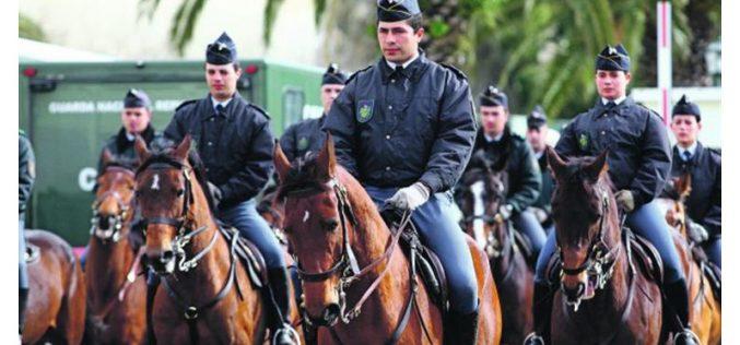 Entrega de 39 novos cavalos à GNR