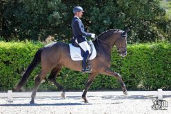 "Andreas Helgstrand adquire 3 cavalos CPD do Stud ""Massa"" (VÍDEO)"