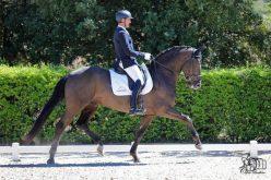 "Andreas Helgstrand adquire 3 cavalos CPD do Stud ""Massa"" (VÍDEO)"