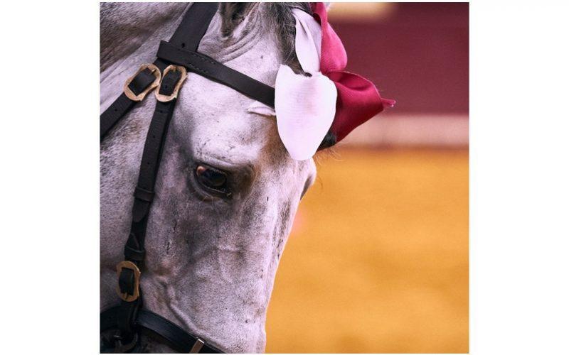 Debate: O Cavalo Lusitano e o Toureio