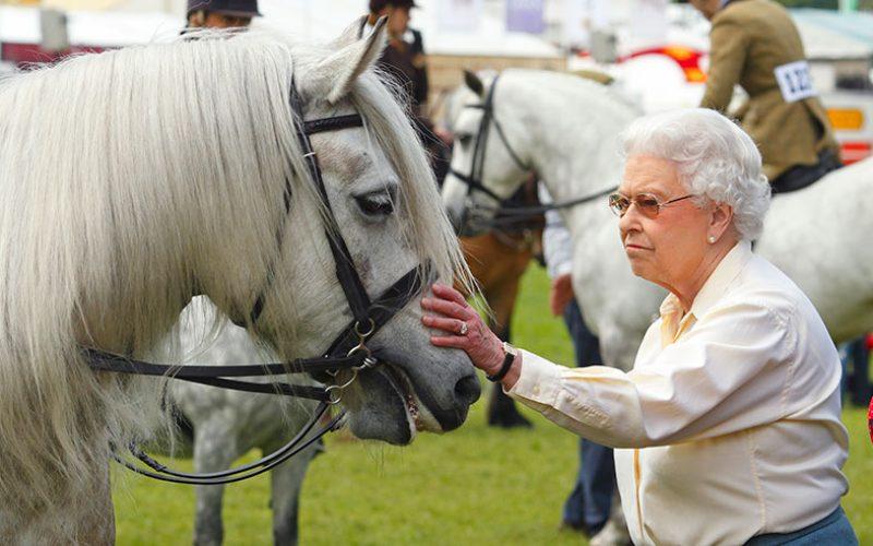 Morreu «PH Keston» cavalo da escolta da Rainha Isabell II