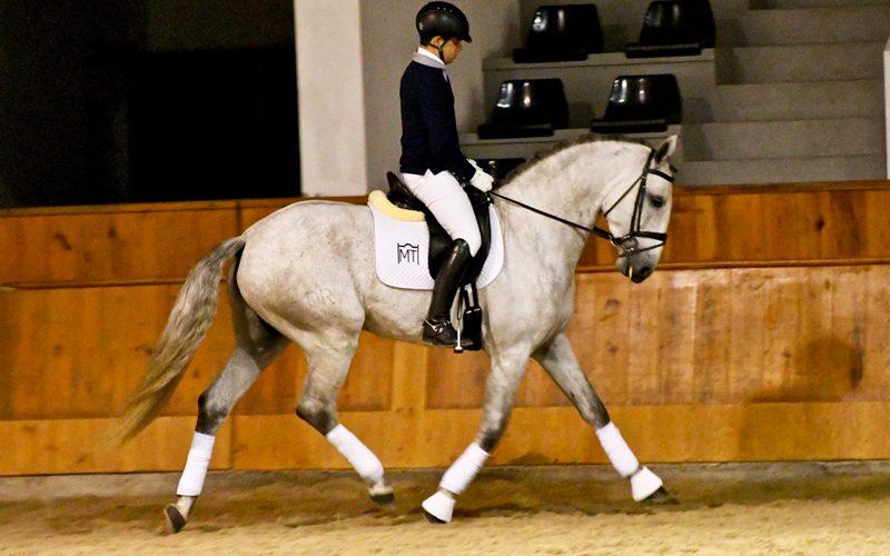 Projecto Cavalos Lusitanos no Ensino: Vitor Fraústo e «Lux» alcançam 84,36% (ACTUALIZADA)