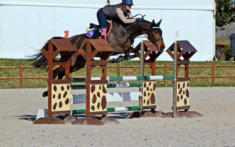 CSIYH1* Vilamoura 2019: Arrancou a 1ª semana de provas de Cavalos Novos (VÍDEO)