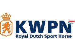 KWPN apoia cruzamento com éguas Lusitanas
