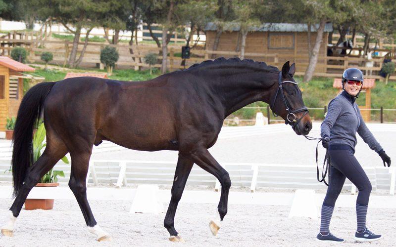 CDI3* Cascais: 40 Cavalos passam no Vet-Check