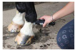 FEI proíbe tosquiar pernas do cavalo durante concursos
