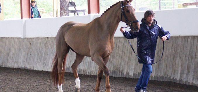CDI3* Cascais: 39 Cavalos passam na inspecção veterinária