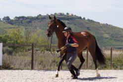Rota Lusitana 2019: 45 Cavalos passaram na inspecção veterinária