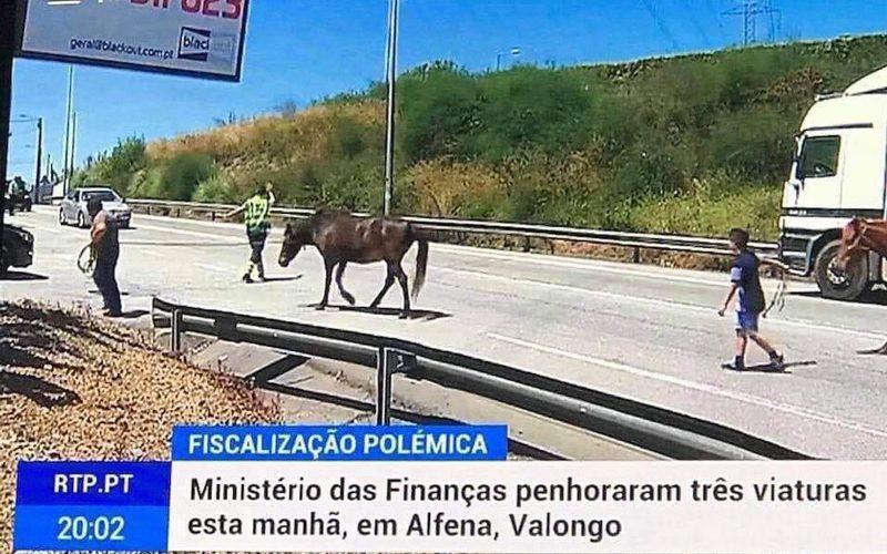 Camião de cavalos arrestado pelo fisco